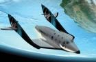 Agência brasileira levará pessoas ao espaço por 250 mil dólares em 2020