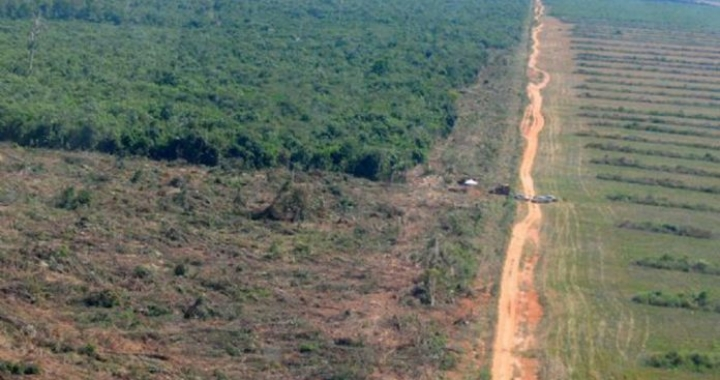 Mato Grosso é responsável por 29% do desmatamento