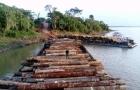 Ibama apreende mais de 3 mil metros de toras de madeira em Novo Aripuanã