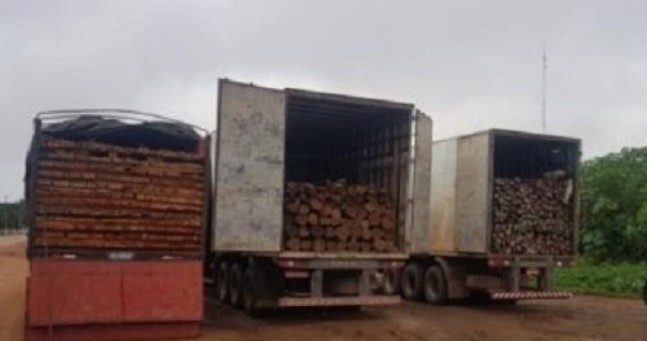 Madeiras apreendidas são usadas para construção de pontes em Mato Grosso