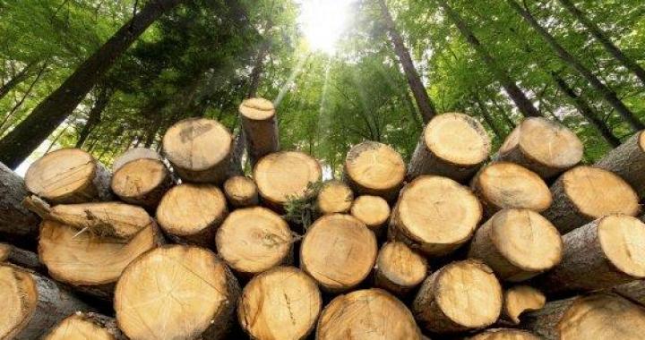 Ibama aplica R$ 45 milhões em multas por desmatamento em MT