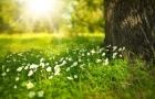 Previsão do tempo: primavera começa nesta terça com chuva de até 100 mm