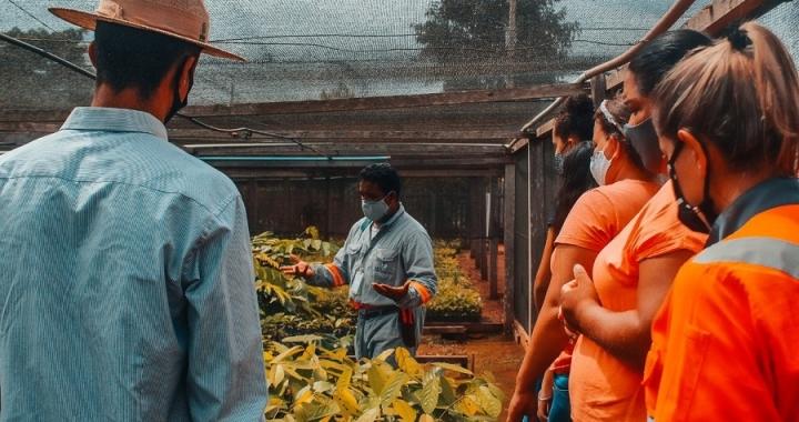 Nexa realiza curso sobre plantio de mudas no viveiro que mantém em Aripuanã